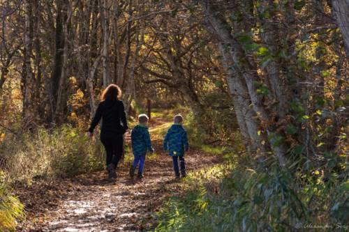 Wanderung durch junge Wälder