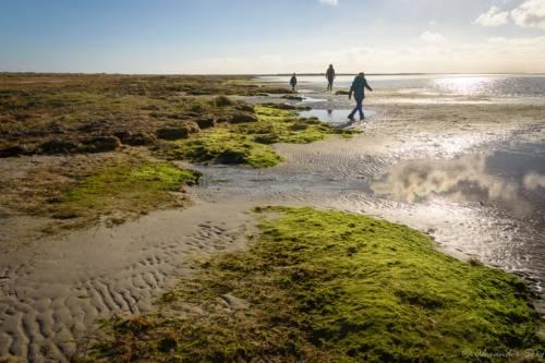 Junges Land - zwischen Gras und Algen