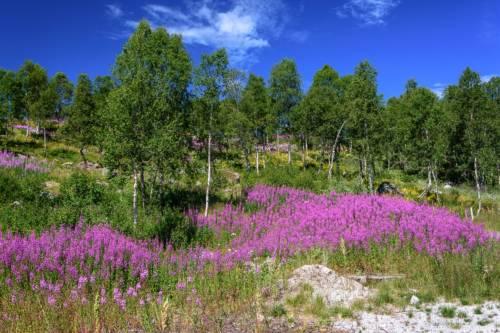 Norwegen Landschaft D72 0652