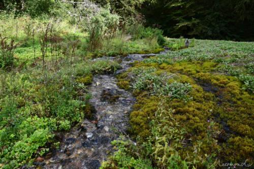 Frisches Trinkwasser - direkt von der Natur
