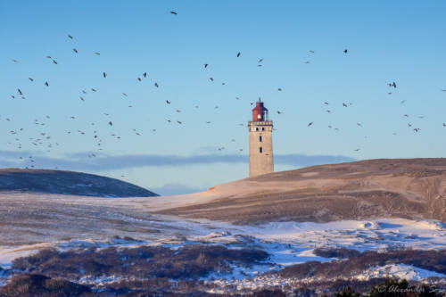 Dänemark Rubjerg Knude Fyr Winter-5623