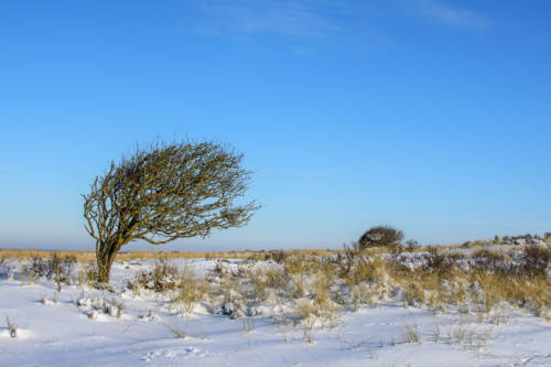 Dänemark Rubjerg Knude Fyr Winter-5872