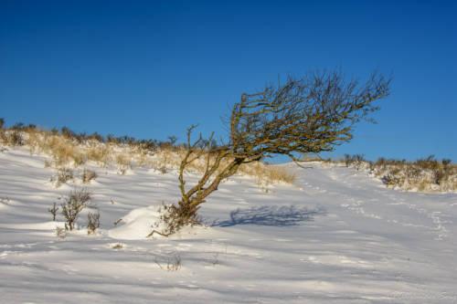 Dänemark Rubjerg Knude Fyr Winter-5877