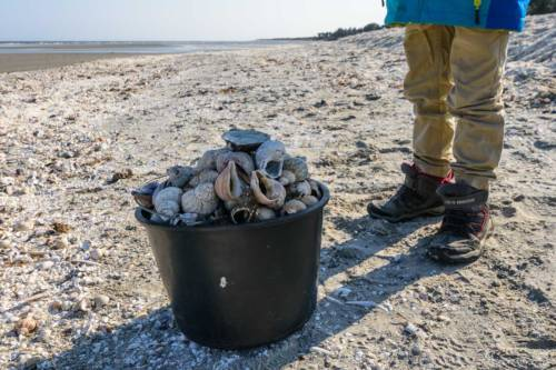 Saeby Ostsee 2019-6956