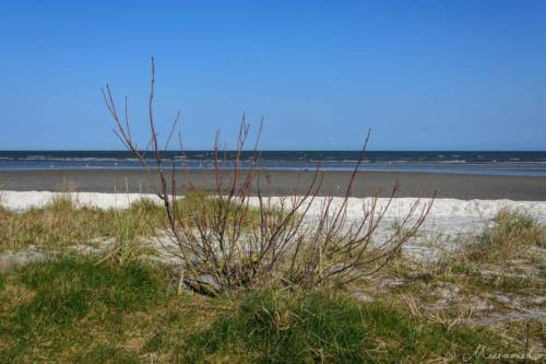 Saeby Ostsee 2019-7030