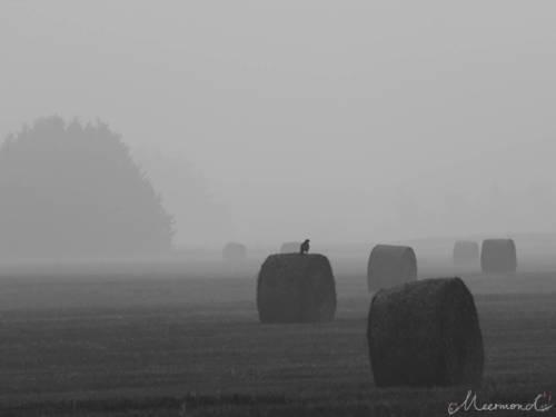 Dänemark im September - Heuballen im Nebel