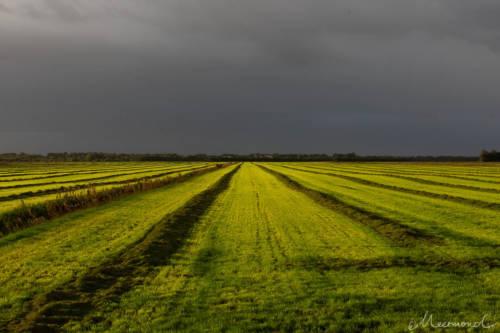 Dänemark im September - Leuchtende Felder
