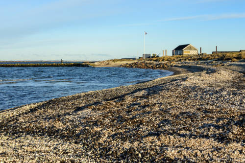 Muscheln am Strand von Løgstør