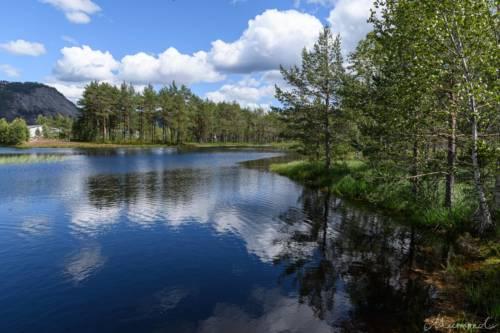 Norwegen See Wald