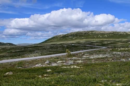 Uvdal-Norwegen-1493