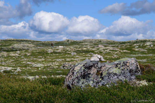 Uvdal-Norwegen-1503