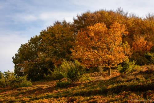 Herbst in den Hammer Bakker